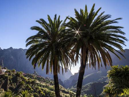 Tour to the Canary Islands